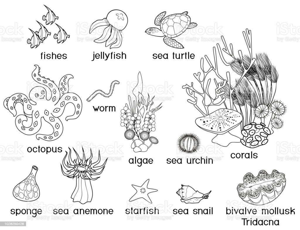 Coloring Page Different Underwater Marine Animals With Titles Stock ...