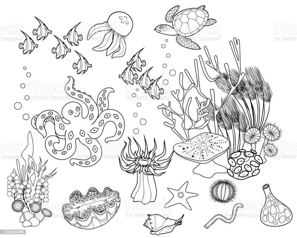 Coloring Page Ecosystem Of Coral Reef With Different Marine Inhabitants Royalty Free