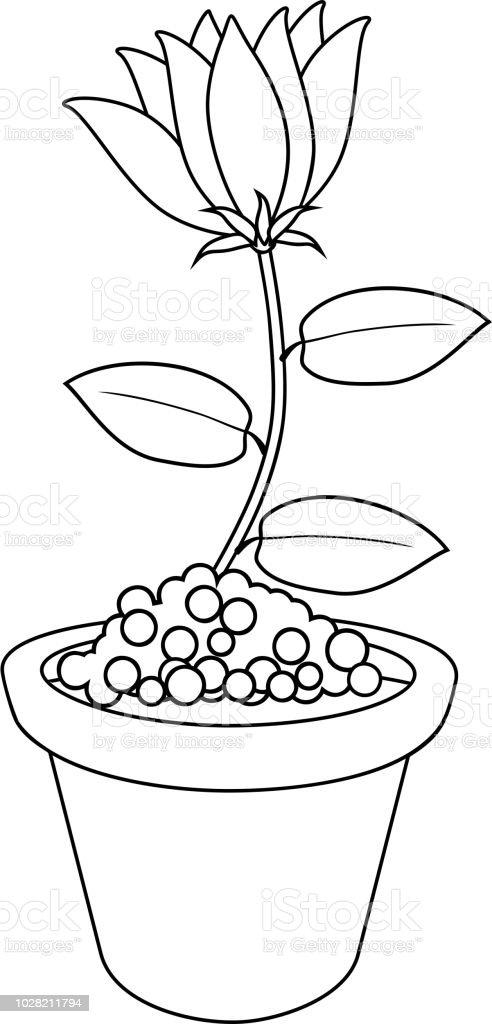 Boyama Sayfası Saksı Içinde çiçek Stok Vektör Sanatı Animasyon