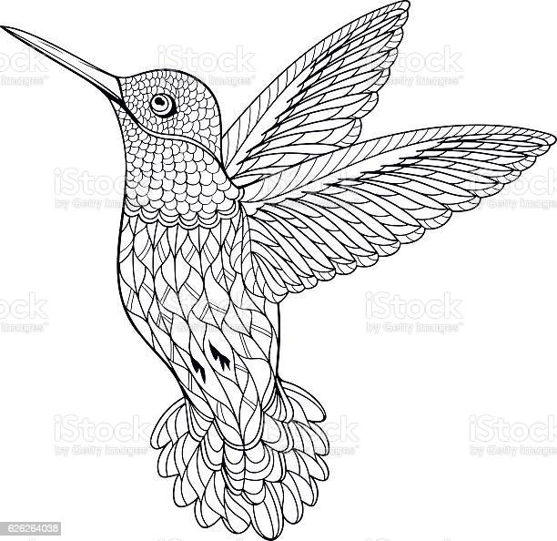 coloring page hummingbird vector id