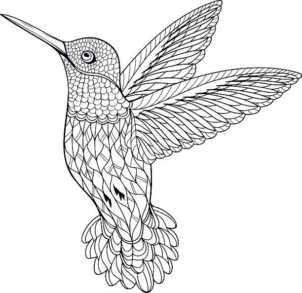 Coloring Page Hummingbird - Illustration vectorielle