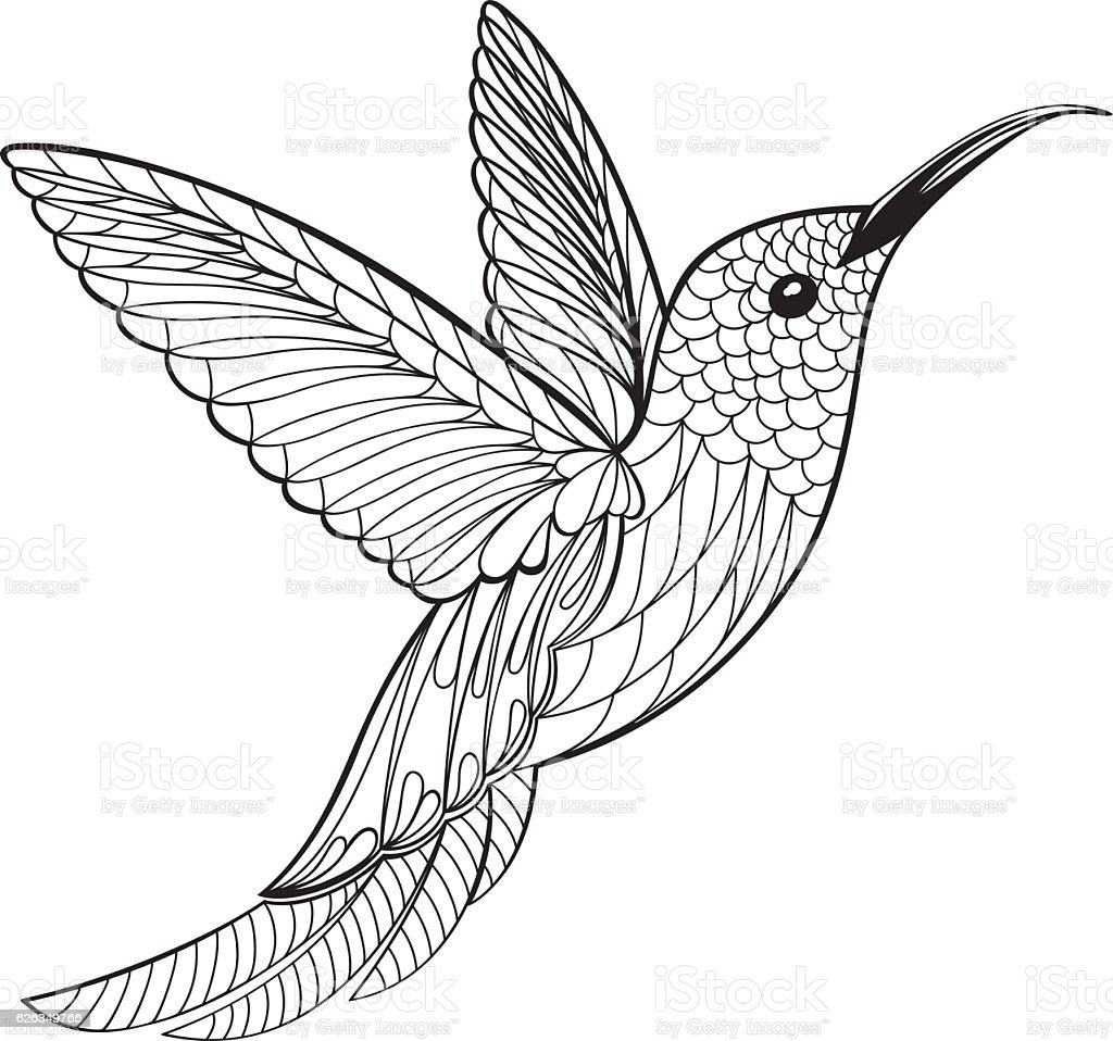 Hummingbird Animal Coloring Pages. Animal  Bird Themes Black And White Boho Coloring Page Hummingbird Stock Vector Art More Images of