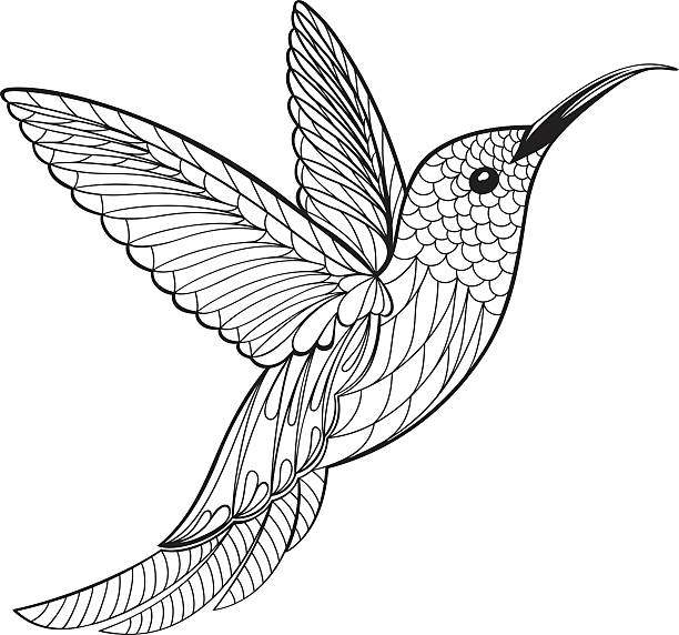 Coloring Page Hummingbird vector art illustration