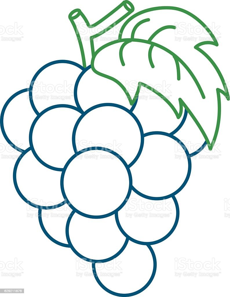 Coloring Page Illustration of Grape vector art illustration