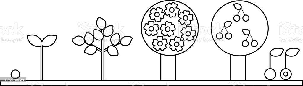 Boyama Sayfası Kiraz Ağacı Yaşam Döngüsü Tohumdan Büyüme Aşamasına