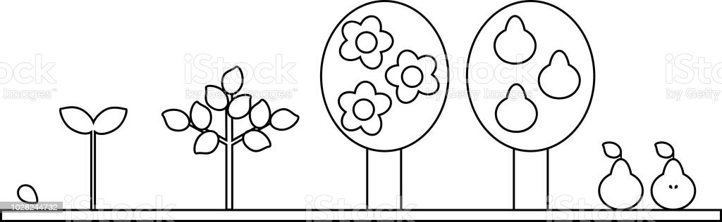 Coloring Page Life Cycle Of Pear Tree Plant Growth Stage From Seed - Seed-coloring-page