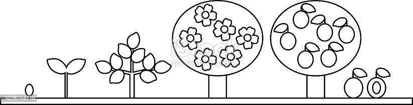 Boyama Sayfası Erik Ağacı Yaşam Döngüsü Tohumdan Büyüme Aşamasına