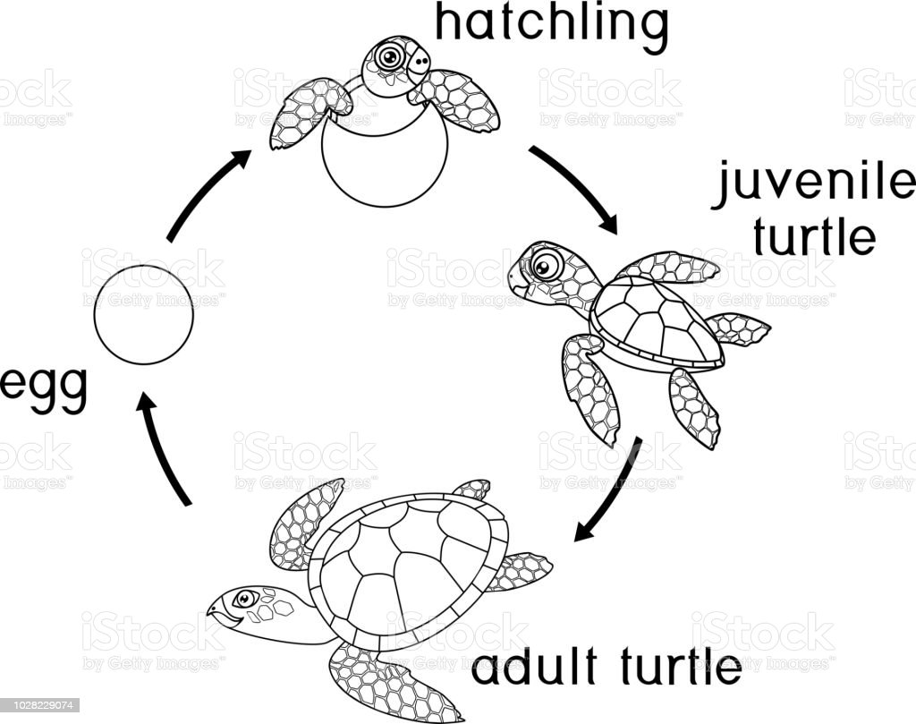 Sea Turtle Pictures To Color. printable sea turtle coloring page ...