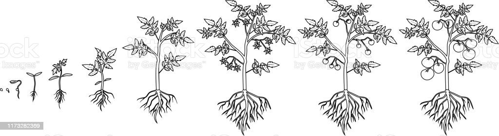 FREE! - Plant Colouring Sheets (teacher made) | 280x1024