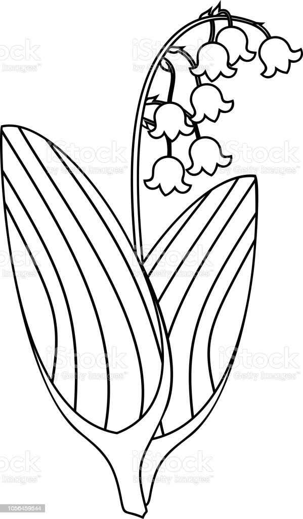 Malvorlagen Maiglockchen Pflanze Mit Bluten Und Blattern Stock