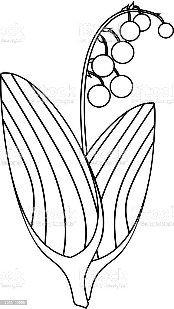 Boyama Sayfası Lily Vadi Bitki Olgun çilek Ve Yaprakları Ile Stok