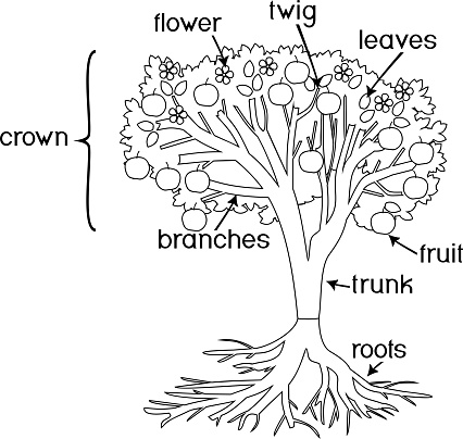 Coloring Page Parts Of Plant Morphology Of Tree With Crown Root System Fruits And Titles Stock Illustration Download Image Now Istock
