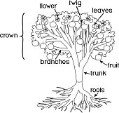 Parts Of Plant Morphology Of Tree With Green Crown Root System And