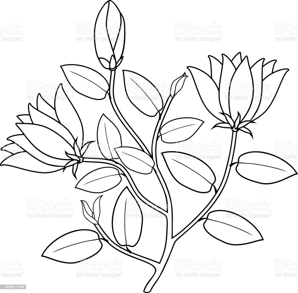 Malvorlagen Pflanze Mit Blüten Und Blättern Stock Vektor Art Und
