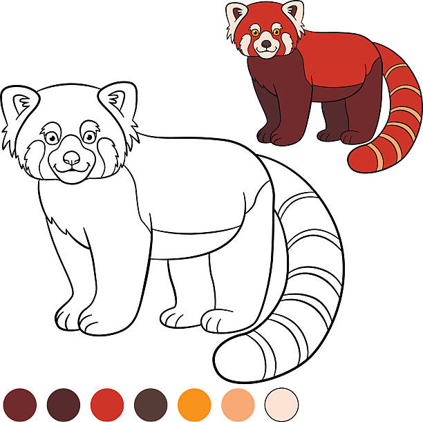 Best Panda Bear Coloring Pages Illustrations Royalty Free