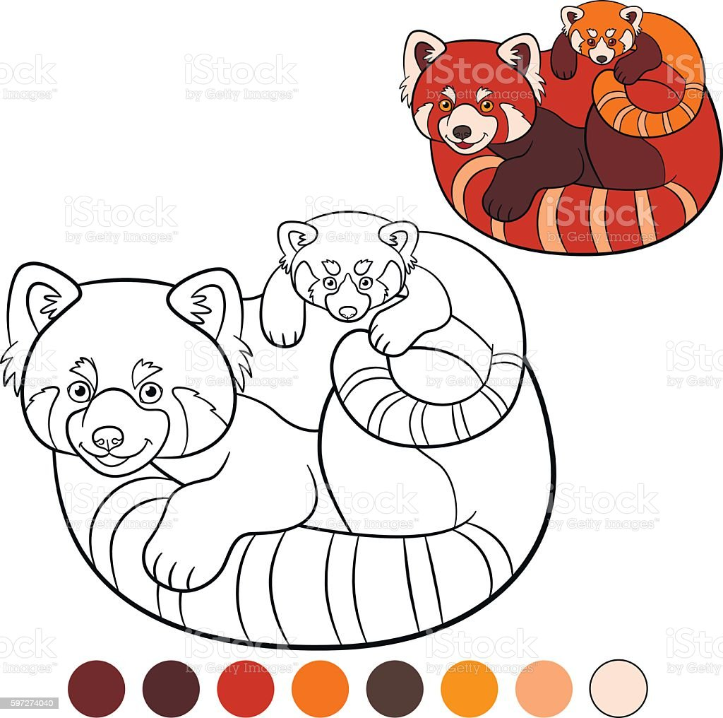 coloring page red panda mother red panda with her baby stock