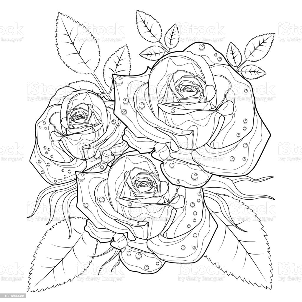 Top 25 Free Printable Beautiful Rose Coloring Pages for Kids | 1024x1024