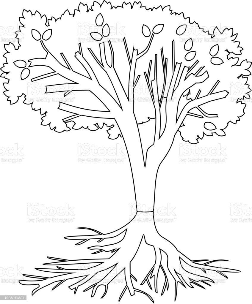 Coloring Page Tree With Root System Stock Illustration Download Image Now Istock