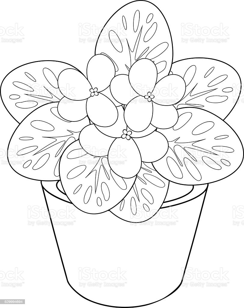 Coloring Page With African Violet Flower In Pot Royalty Free