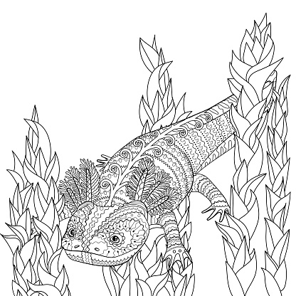 Coloring page with axolotl in patterned style.