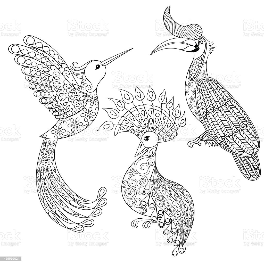 Coloring page with Bird Rhinoceros, Hummingbird and exotic bird, vector art illustration