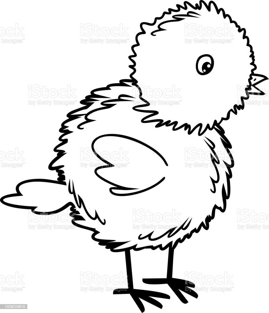 Ilustración De Página Para Colorear De Pollito Dibujos