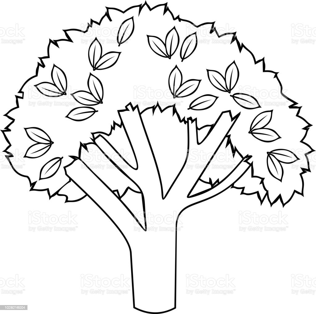 kleurplaat met bladverliezende boom