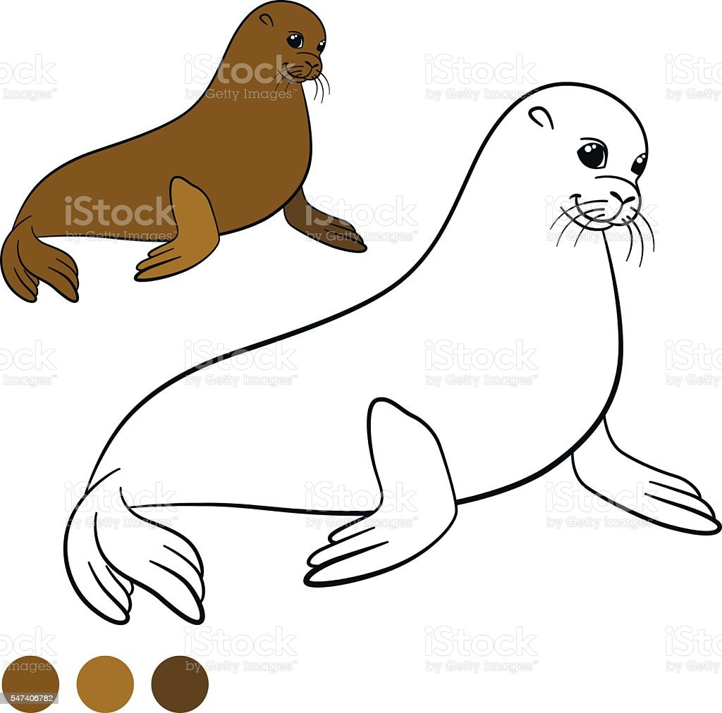 Coloring Page With Colors Brown Little Cute Fur Seal Stock Illustration Download Image Now Istock