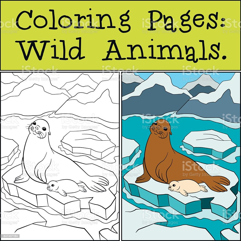 coloring page with example mother seal with her cute baby stock