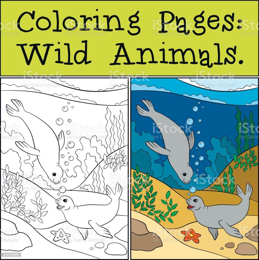 Coloration Page D Exemple Deux Petites Joli Les Phoques