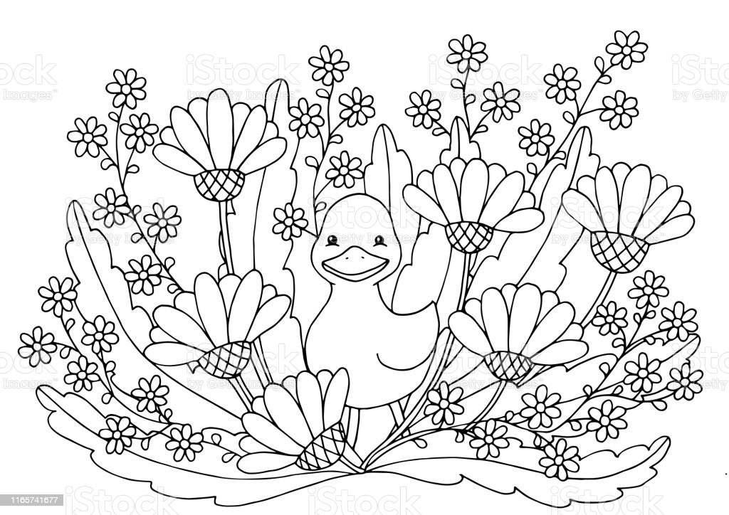 Coloring pages. Kind duck and free little cute ducklings walk on ... | 724x1024