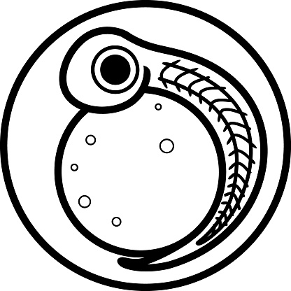 Coloring page with freshwater fish egg (spawn) with embryo