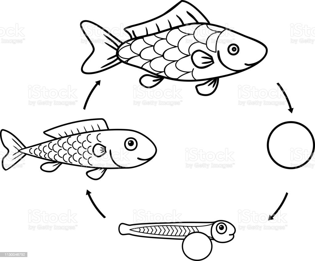 Kleurplaten Dieren Uit Een Ei.Kleurplaat Met De Levenscyclus Van Vissen Opeenvolgende Fasen Van