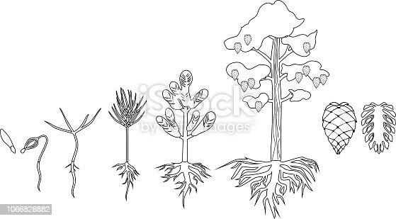 ᐈ Imagen De Página Para Colorear Con Ciclo De Vida De árbol