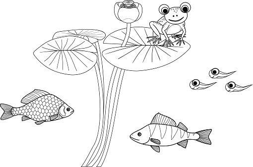 Coloring page with pond dwellers. Frog sitting on leaf of blooming water-lily plant, tadpoles, carp and perch isolated on white background