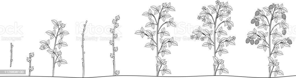 malvorlagen rosen schneiden  x13 ein bild zeichnen