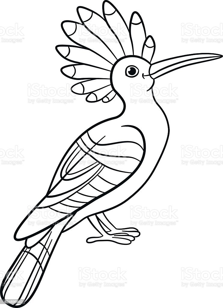 Coloring Pages Cute Beautiful Hoopoe Sits Lizenzfreies Vektor Illustration