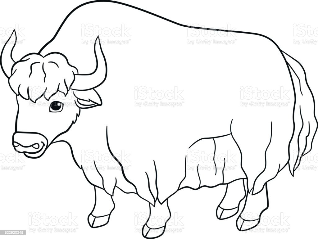 Coloring pages cute beautiful yak smiles royalty free coloring pages cute beautiful yak