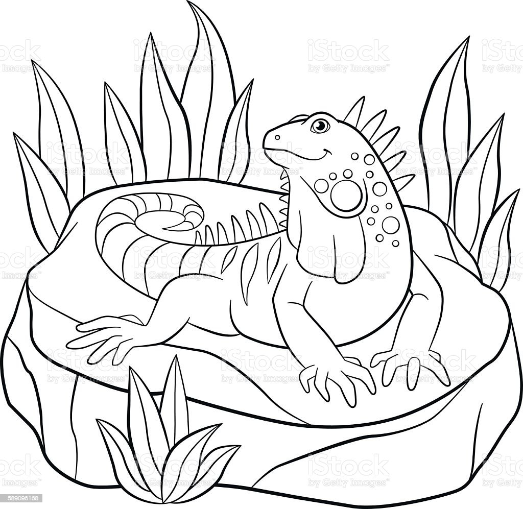 Coloring pages cute iguana sits on the rock stock vector for Iguana coloring pages