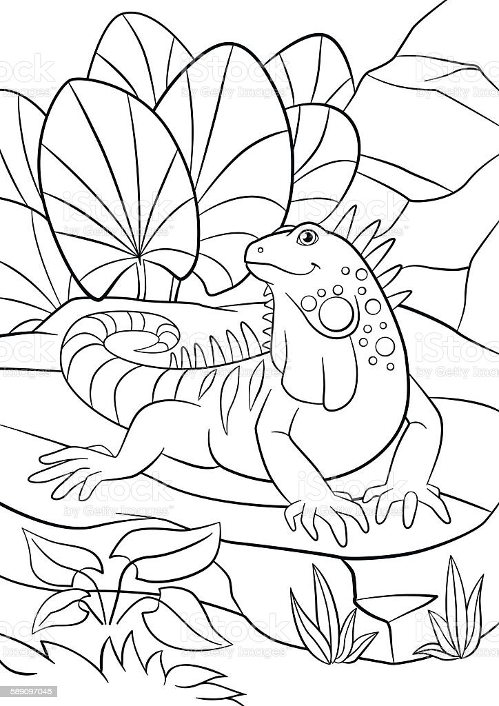 Coloring Pages Cute Iguana Sits On The Rock Vektor Illustration