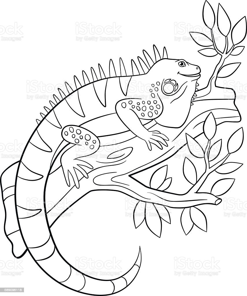 Coloring Pages Cute Iguana Sits On The Tree Branch 검정에 대한 ...