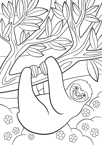 Coloring Pages Cute Lazy Sloth On The Tree Stock