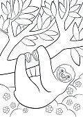 Coloring pages. Cute lazy sloth on the tree.