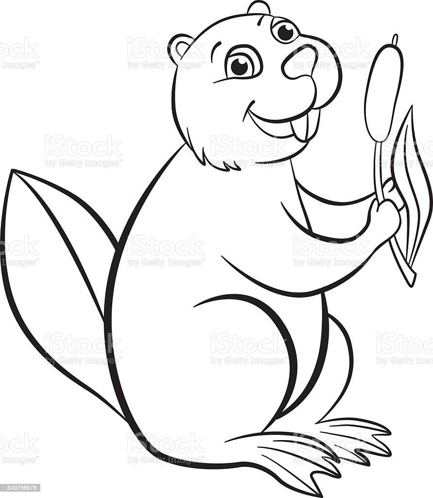Coloring Pages Little Cute Beaver Smiles Stock Vector Art More