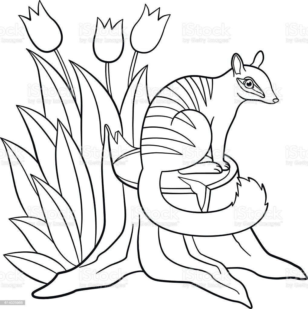 Coloring Pages. Little Cute Numbat Sits On The Stump. Royalty Free Coloring  Pages