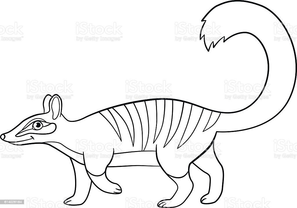 Superb Coloring Pages. Little Cute Numbat Walks. Royalty Free Coloring Pages  Little Cute Numbat