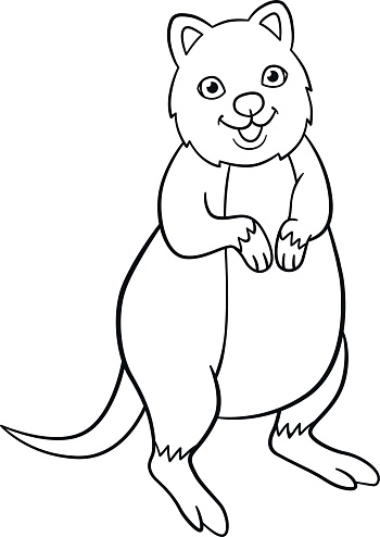 coloring pages little cute quokka smiles stock