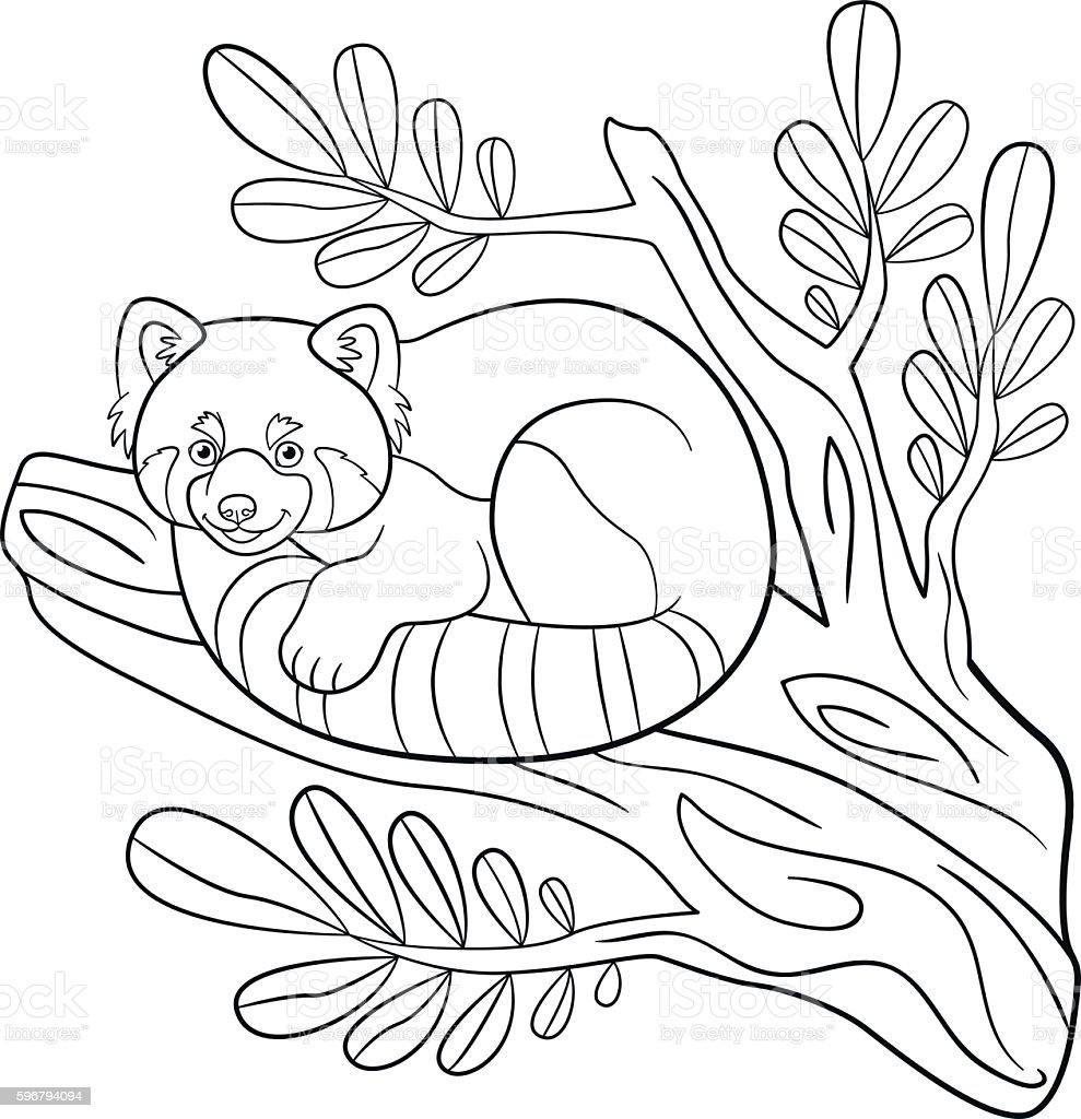 Coloring Pages. Little Cute Red Panda On The Tree Branch. Royalty Free  Coloring