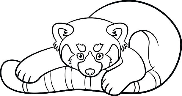 Royalty free red panda clip art vector images for Red panda coloring page