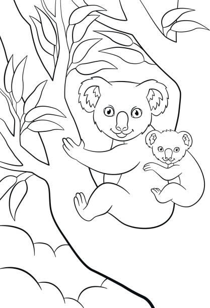 koala outline drawings illustrations royaltyfree vector